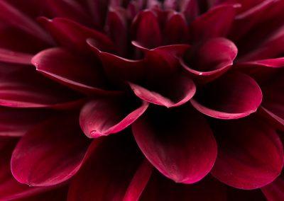 flower-closeup07