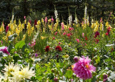 flower-garden02