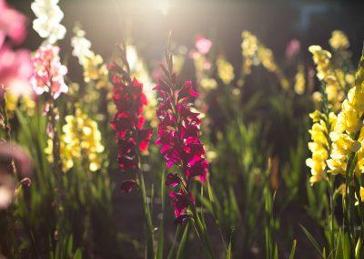 flowers-sun02